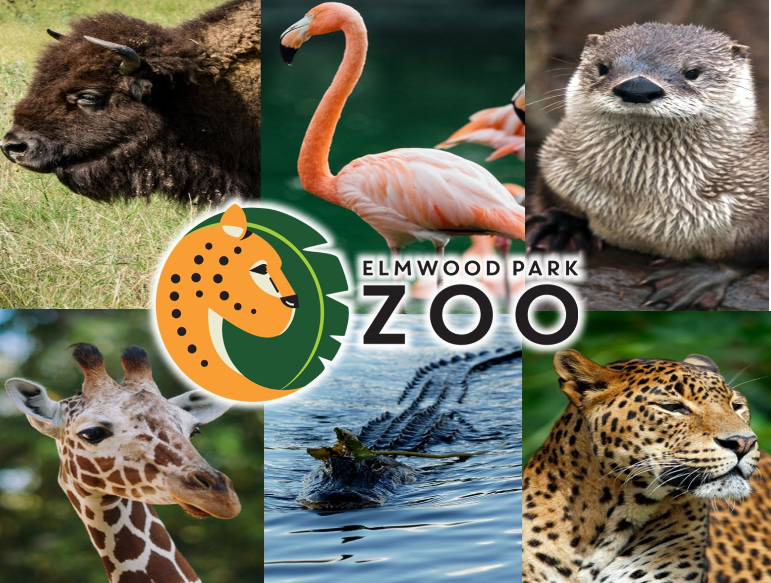 Four Tickets to Elmwood Park Zoo for $36! - 92 5 XTU